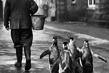 Historical / by Binghamton Zoo