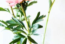 Flowers and plants / by Annika Persson