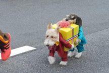 Halloween cuteness / Halloween puppies!! / by Penguin Group (USA) Librarians Den