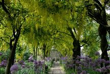 le jardin et paysage / garden and landscape / by Picasso Summer