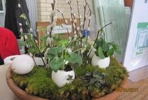 Seasonal Decorations / by Help For Women