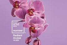DERMAdoctor Radiant Orchid Pantone 2014 / by DERMAdoctor Skincare