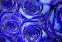 blue / by Deborah Peoples