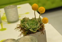 Gray, Green and Yellow / I have lots of weddings with a similar look and colors.  Here is their inspiration. / by Art with Nature - Kim Sanders