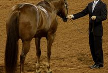 Showmanship at Halter Tips / No matter what level you are competing at – 4-H, weekend breed shows or the AQHA World Championship Show – success in showmanship comes down to three things: presentation of the exhibitor, presentation of the horse and performance. Be on your way to showmanship success with these tips from America's Horse Daily (www.americashorsedaily.com). / by American Quarter Horse Association (AQHA)