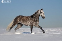 Horse-Breeds / by Mary Snarr