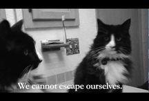 Animals on Video / ~m~ / by Mary Frattaroli