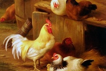 chicken a holic / by Stacy Reitz