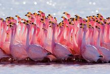 Flamingo Love... / by Jacquie Gemmill