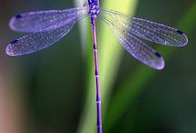 dragonfly / by Nadine Bexte