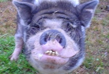 The Ark - This little piggy / Pigs. / by Yvonne Rose