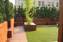 backyard/garden / by Andrea Alzmann