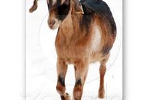 Goats / by Angelandspot