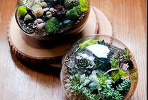 Terrariums / by Aimee G.