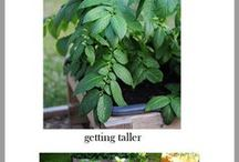 Green Thumb Ideas / by Stacey Howes