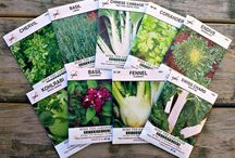 Seeds of the Month Club / 8 packs of seeds your 1st month, 4 packs every month thereafter. Join the club at http://www.averagepersongardening.com/seedsclub Grow more! Spend less! / by MiketheGardener