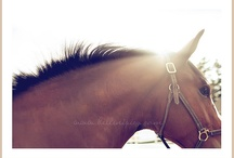 Equine Lovin'.... / by Jennifer Vare