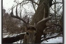 DHBB Post / Post from Deerhuntingbigbucks.com blog. / by DHBB (Adam