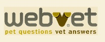 Dogs / Love all things canine / by WebVet