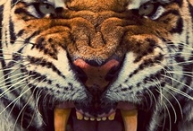 Amazing animals / by Carlota Ruiz