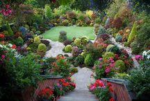 garden / by Becca Ross