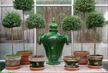 House Plant Ideas / by Savvy Southern Style