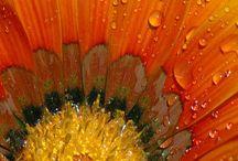 Flores bellas  / by Flor Enid Morera Lobo