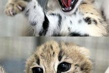 teh cuteness! / by David Edmonds
