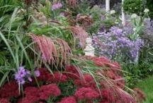 Gardening ideas / by Julie Dewald