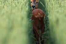 Animals / by Hena Tayeb
