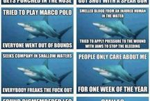 Shark board. / Sharks, & their awesomeness. / by Brittany Conklin