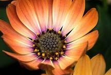 Flores (naturales) / by Genoveva Serrano Ramirez