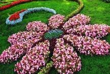 Garden time / by Terri Hanson