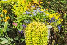 Container Garden Ideas / by Marie Novak