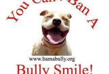 OH Bully / Because I love all bulldogs / by Christy Cofer
