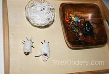 Bug Theme for Preschoolers / by Stacey Feehan