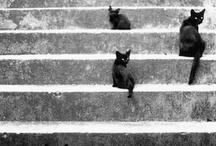 CAT!!! / by Olivea Becker