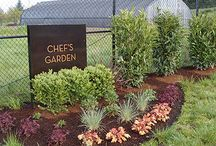 Chef's Garden / Our beautiful Chef's Garden at The Allison Inn & Spa  / by The Allison Inn & Spa (OR Wine Country)