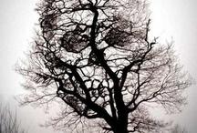 Skeletor / by Jessica Betts