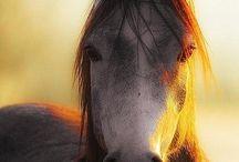 Horses and Donkeys / Horses and Donkeys / by Cynthia Marsh
