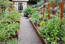 Garden / by Christi
