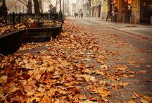 fall / by Shelly Lamberta