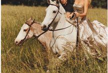 Horses / by Mary McLaughlin