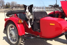 Dog is my Copilot / Ural Sidecars and what many will argue are the best passengers—dogs! Follow the board for an invite to be abel to post your best Ural & Dog photos. / by Ural Motorcycles