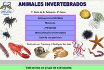 Animals invertebrats / Recursos per treballar els animals d'invertebrats a 5è de Cicle Superior / by MONTSERRAT CASAS BUL