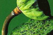 Green Inspiration  / by Live Haver Johansen