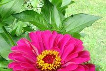 Southwest gardening / by Judy Brown