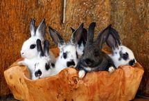 Bunnies & Rabbits / by Erin Jackson