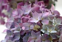 """My Muted Pink Palette / """"Pink is a beautiful color, because it is one of the colors that the sun makes at twilight and in the dawns."""" C. JoyBell C. / by Eve's Garden"""