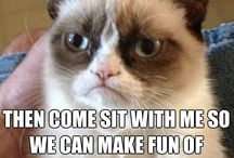 Grumpy Cat Memes / by Shala Torres Timms